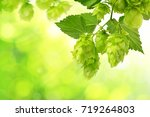 branch of hop with cones and...   Shutterstock . vector #719264803
