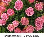 bouquet of pink roses   Shutterstock . vector #719271307