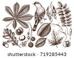vintage set of hand drawn... | Shutterstock .eps vector #719285443