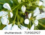 bee posed on a petal of flower... | Shutterstock . vector #719302927