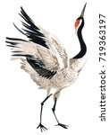japanese crane bird watercolor... | Shutterstock . vector #719363197