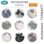 chinchilla breeds icon set flat ... | Shutterstock .eps vector #719364277