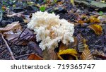 Coral Fungus In The Forest...