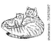 sketch mom cat with kitten... | Shutterstock . vector #719370397