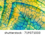 amazing detailed and... | Shutterstock . vector #719371033