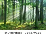 morning in the forest   Shutterstock . vector #719379193