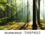 morning in the forest | Shutterstock . vector #719379217