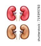 vector realistic red healthy... | Shutterstock .eps vector #719395783
