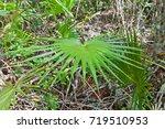 grand cayman island   august 18 ... | Shutterstock . vector #719510953