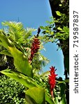 Small photo of The beautiful Alpinia Flower in the garden of the beach house