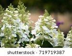 Beautiful Garden Of Blooming...