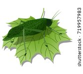 realistic insect vector... | Shutterstock .eps vector #719957983