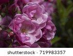 a vigorous fine looking... | Shutterstock . vector #719983357