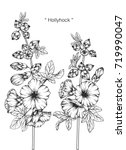 hand drawn and sketch hollyhock ... | Shutterstock .eps vector #719990047