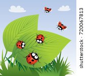ladybirds. vector illustration. | Shutterstock .eps vector #720067813