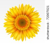 Yellow Sunflower On The  White...