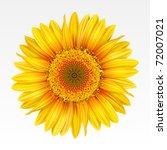 yellow sunflower on the  white... | Shutterstock .eps vector #72007021