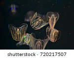 comb jelly with bioluminescence ... | Shutterstock . vector #720217507
