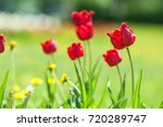 spring landscape with flowers.... | Shutterstock . vector #720289747