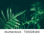 Green Fern Foliage On Dark...