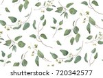 eucalyptus different tree ... | Shutterstock .eps vector #720342577