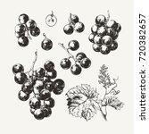 ink drawn grape | Shutterstock .eps vector #720382657