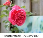 mothers day background with... | Shutterstock . vector #720399187