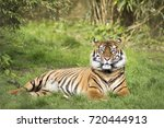 tiger | Shutterstock . vector #720444913