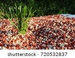 granular autumn lawn fertilizer ... | Shutterstock . vector #720532837