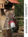 Small photo of Donkey head