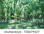 green glade in the forest.... | Shutterstock . vector #720679327