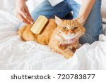 woman combs a dozing ginger cat'... | Shutterstock . vector #720783877