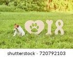 cute fox terrier puppy rubbing... | Shutterstock . vector #720792103