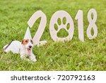 adorable fox terrier puppy... | Shutterstock . vector #720792163