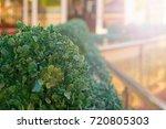 porch summer cafe ornamental... | Shutterstock . vector #720805303