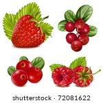 photo realistic vector... | Shutterstock .eps vector #72081622