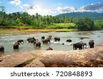 Asian Elephants In The Park Of...