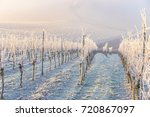 winter landscape in the vineyard | Shutterstock . vector #720867097