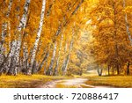 birch grove with a road on... | Shutterstock . vector #720886417