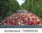 gala apples  gala apples are... | Shutterstock . vector #720903133