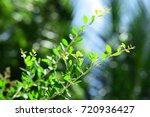 fresh nature abstract... | Shutterstock . vector #720936427