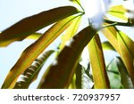 nature abstract background of... | Shutterstock . vector #720937957