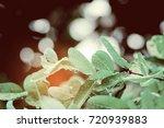 green leaves natural background ... | Shutterstock . vector #720939883