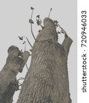 dead wood | Shutterstock . vector #720946033