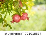 ripe colorful pomegranate... | Shutterstock . vector #721018837