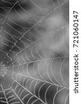 spider's web with morning dew | Shutterstock . vector #721060147