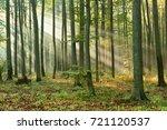 forest landscape | Shutterstock . vector #721120537