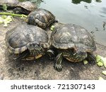 turtles have sun bath on dry... | Shutterstock . vector #721307143