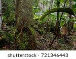 jungle  tropical rainforest  of ... | Shutterstock . vector #721346443