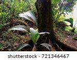 jungle  tropical rainforest  of ... | Shutterstock . vector #721346467